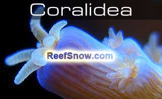 CORAL IDEA - software