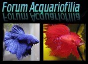 forumacquariofilia _AT_ libero.it