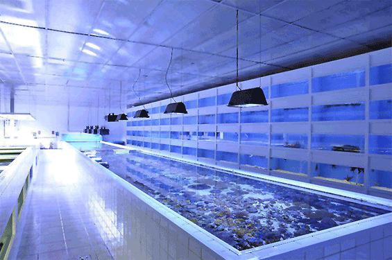 Plafoniere T5 Per Acquari : Plafoniere a led aqua illumination vega e sol reefsnow l
