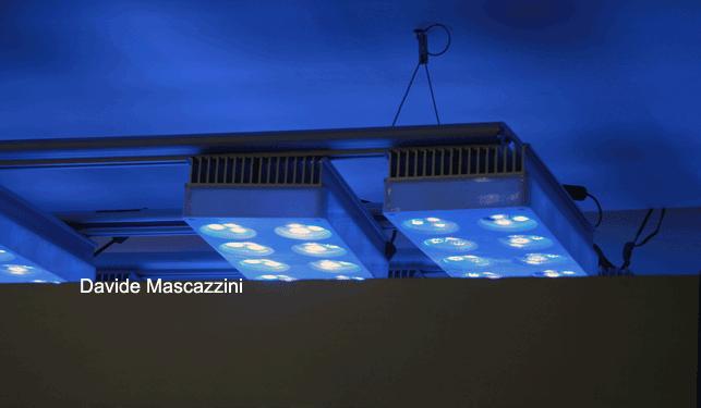 Plafoniera Led Acquario : Plafoniere a led aqua illumination vega e sol reefsnow l