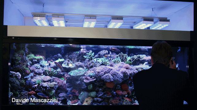 Plafoniere Acquario Acqua Dolce : Plafoniere a led aqua illumination vega e sol reefsnow l